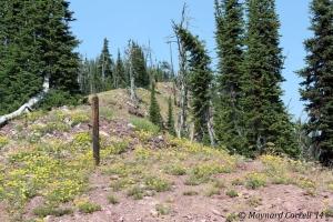 Ridge at Morrell Mountain