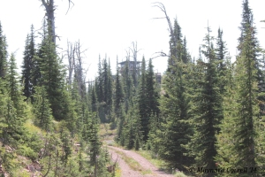 Fire watchtower at Morrell Mountain, MT